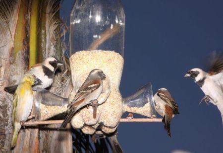 Ptice na hranilici (foto: Derek Keats/Wikimedia)