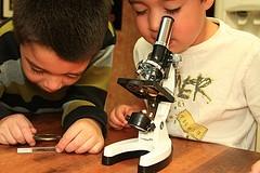Svakakve zanimljivosti se mogu naći pod mikroskopom (Foto: Flickr)