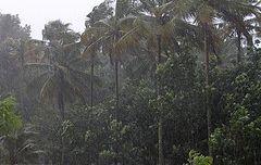 Monsunske šume (Foto: Fllickr)