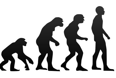 Shematski prikaz evolucije čovjeka (Izvor: Wikimedia commons)