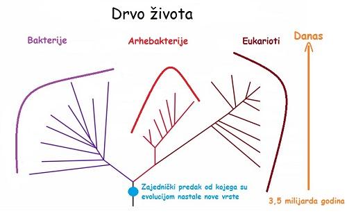 Evolucija života (Izvor: Wikimedia commons)