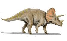 Triceratops horridus (foto: Wikimedia Commons)