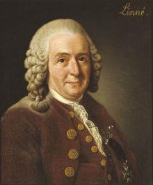 Portret Carla von Linnéa (izvor: Wikimedia Commons)
