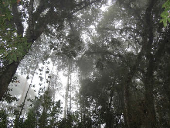Šuma u Kolumbiji (foto: Wikimedia Commons)