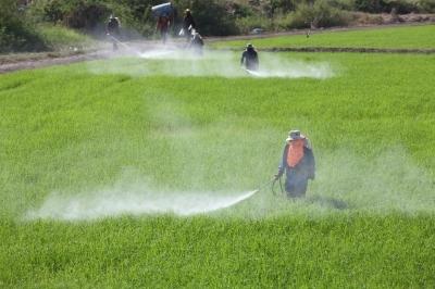 Pesticidi (Foto: FreeDigitalPhotos)