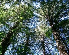 Šuma (Izvor: wikimedia commons)