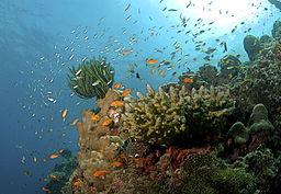 Koralji (Foto: commons.wikimedia)