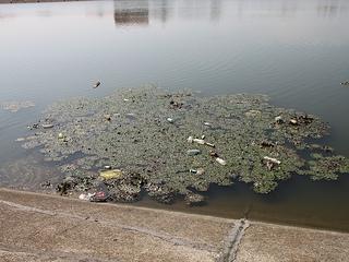 Onečišćenje (Foto: commons.wikimedia)