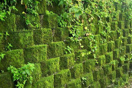 Mahovine koje su prekrile zid (foto: Wikimedia Commons)