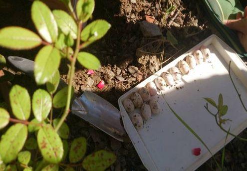 Zaštita barske kornjače2 (Foto: OŠ Bukovac)