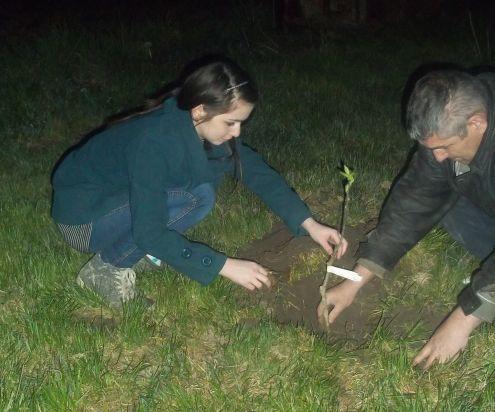 Tata i kćerka sade mušmulu (Foto: OŠ V.Nazor, Komletinci)