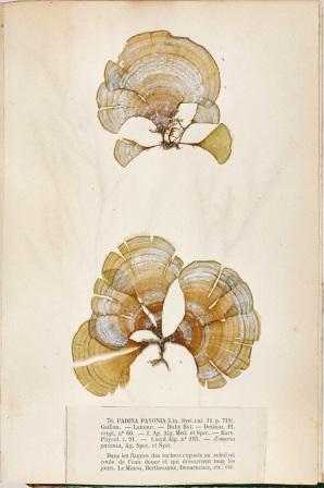 Herbarizirana padina (foto: Wikimedia Commons)
