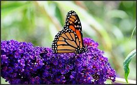 foto: flickr.com