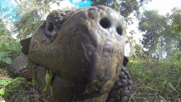 Nove vrste otkrivene (foto: vimeo.com)