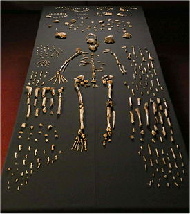 Homo naledi (foto: en.wikipedia.org, Lee Roger Berger research team)